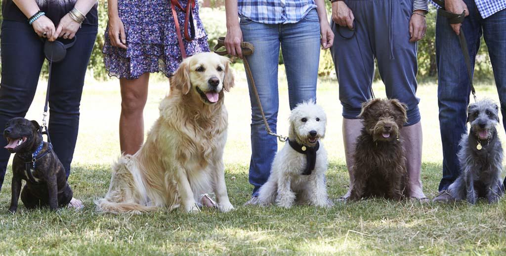 dog training pets landlords tenants
