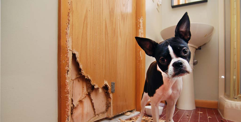 pets damage